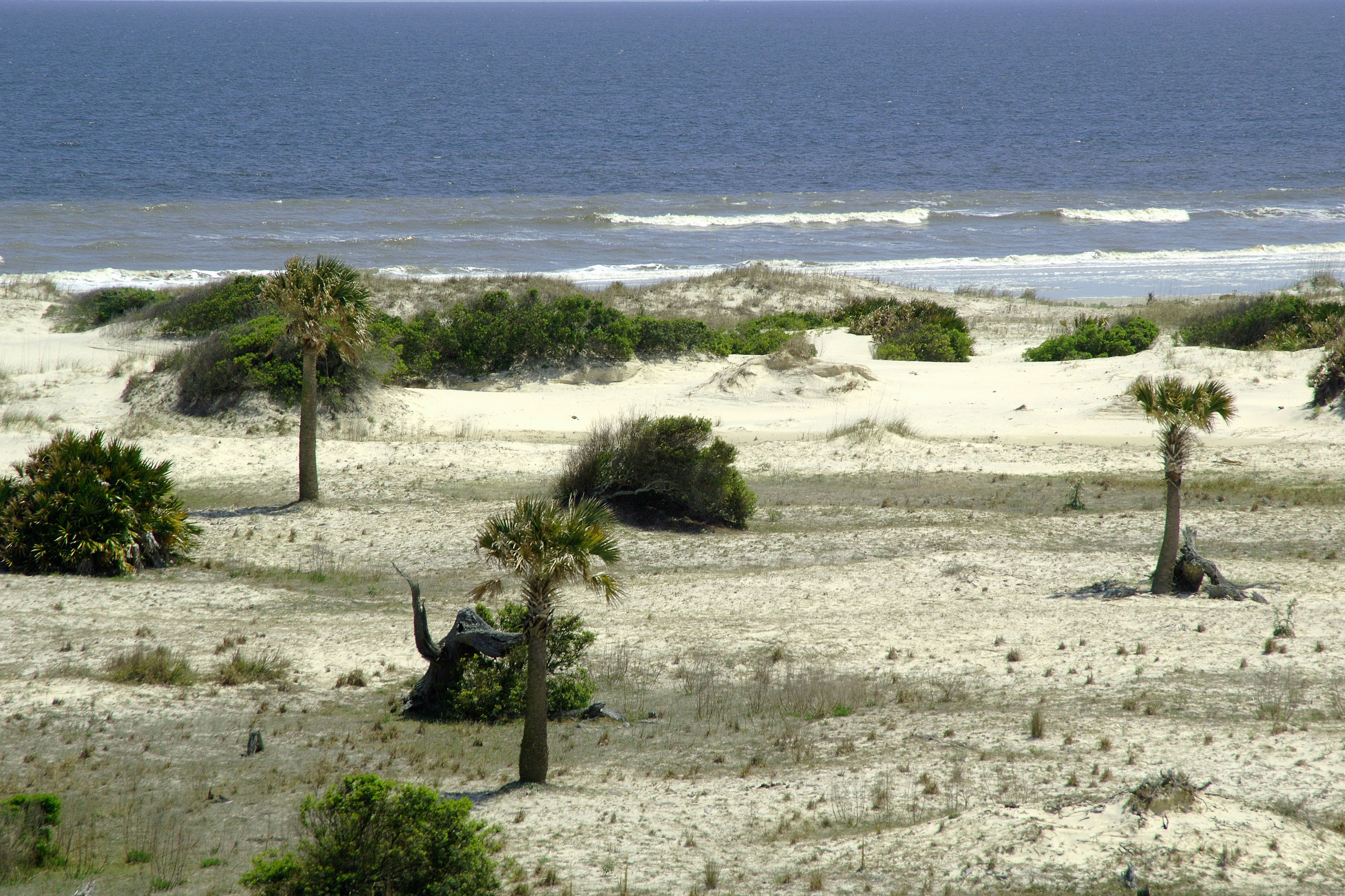 Archer's Acres: Our Visit to Cumberland Island Georgia  |Cumberland Island Georgia